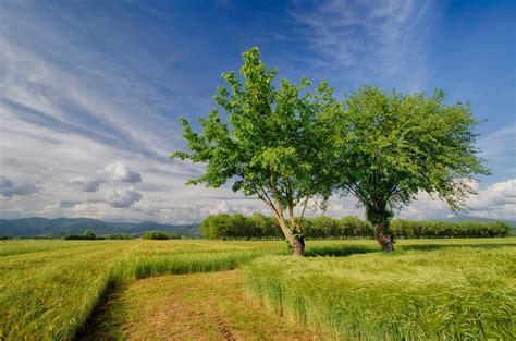 rosa blühende bäume 1716 die 61 besten sch 246 ne hintergrundbilder der natur und des