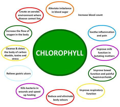 what color is chlorophyll falling in with a chlorophyll rich diet carla golden