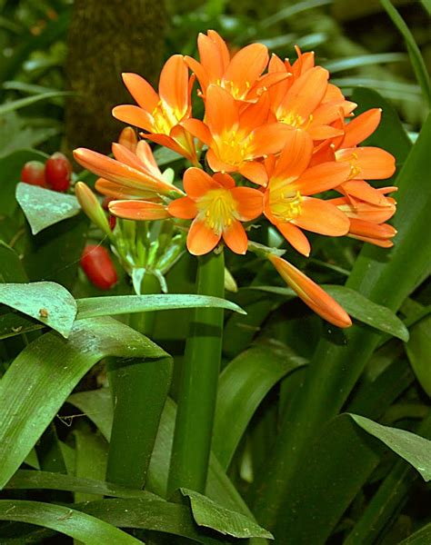 plants are the strangest people list houseplants which have orange flowers