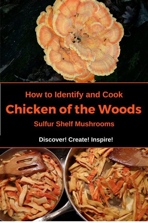 Shelf Of Cooked Chicken by How To Identify And Cook Chicken Of The Wood Sulfur Shelf