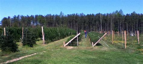 christmas tree farms in va virginia tree farms virginia is for