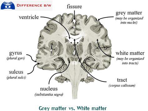 grey matter distinguishing grey matter and white matter difference