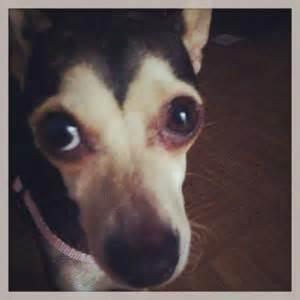 me llamo lucas y 8408114336 me llamo lucas y no soy un perro paperblog