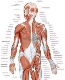H And M Home Decor Wandplaat Spieren Spierenposter Menselijk Lichaam Anatomie