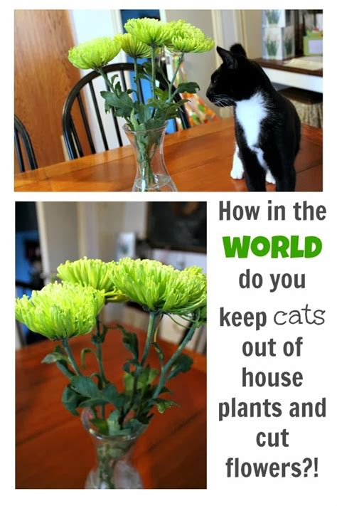 how to keep cats out of house plants and cut flowers the