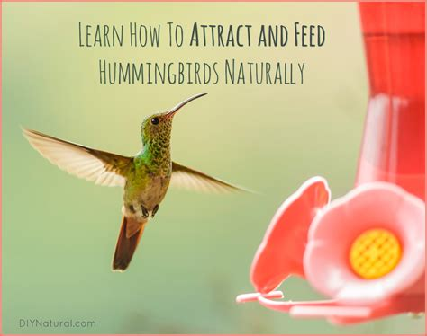 homemade hummingbird food mix crazy homemade