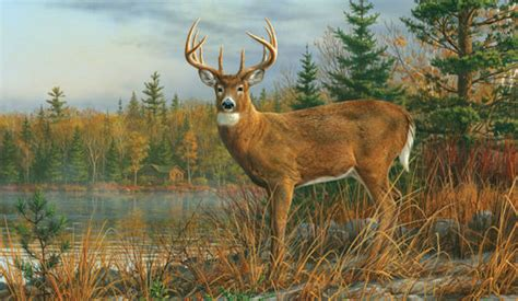National Geographic Wall Murals fall morning buck wall mural