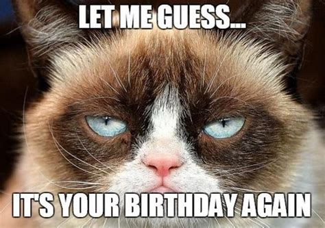 Grumpy Cat Happy Birthday Meme - birthday memes for friend wishesgreeting