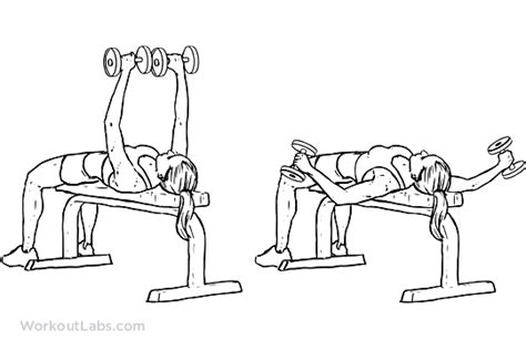 flat bench dumbell flyes flat bench dumbbell fly illustrated exercise guide workoutlabs