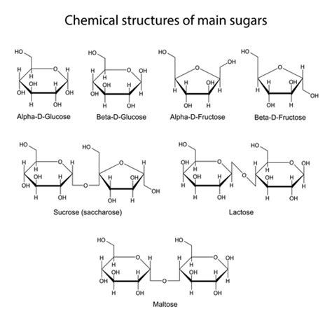 carbohydrates monomer structure building blocks of study guide alyvea