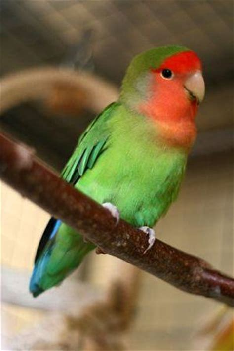 parrot definition bird quote birds quotes trivia and
