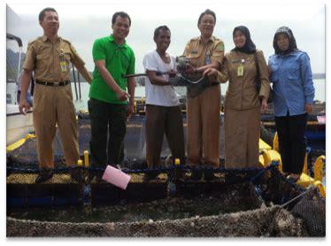 Bibit Cabe Tanjung info tanjung riau panen kerapu 171 dinas kelautan