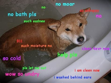 Wow Dog Meme - doge meme shibe dog memes