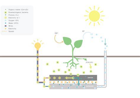 illumina energia energia dalle piante living light la pianta s