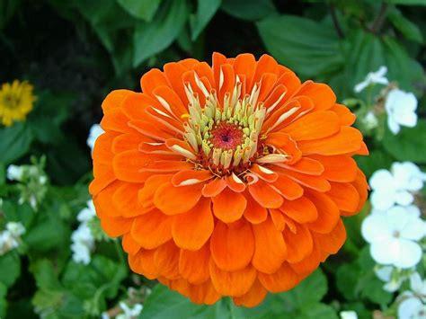 Hi Flower by Hi Fi Web Flower