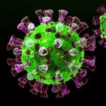 germs    biologist