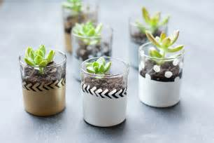 mini succulent planter diy circus berry