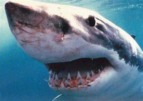 what color are sharks sharks see in colors