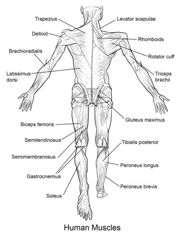 Great website with free biology diagrams to print and/or