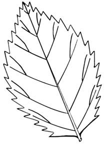 leaves coloring pages leaf coloring pages coloring ville