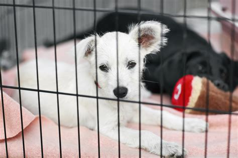 free puppies bay area bay area animal shelters will adopt out pets for free march 18 san francisco chronicle