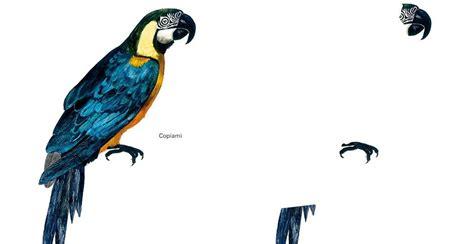 da disegnare uccelli da disegnare e da colorare topipittori