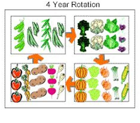 20 Best Images About Crop Rotation On Pinterest Gardens Crop Rotation Home Vegetable Garden