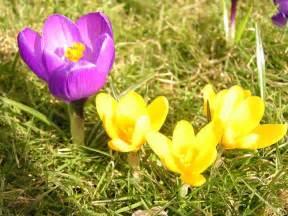 Bilderesultat for bilder av våren