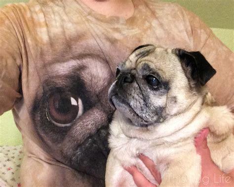 what the pug shirt pug and the pug shirt this pug