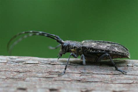 Types Of Bugs Found In Hair by Unboring Boring Beetles Seabrooke Leckie