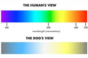 are all dogs color blind vision colourchat