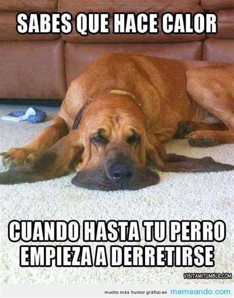 imagenes o memes graciosos memes de perros taringa