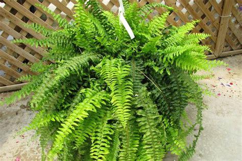 luft befeuchten gesunde luft diese zimmerpflanzen entgiften und