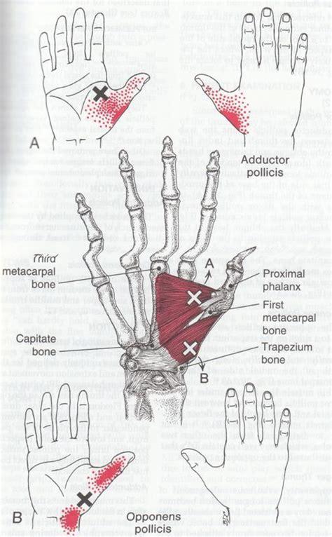 Laser Therapy Trigger Points Detox by De 243 Bedste Billeder Fra Helbred P 229 Detox