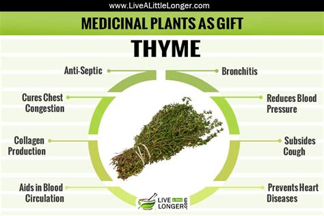 How To Grow Herbs Indoors medicinal herbal plant that can be given as gift thyme