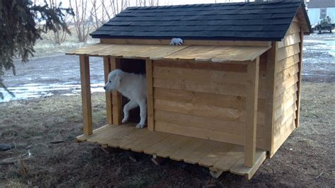 dog new house our new dog house my great pyrenees pinterest