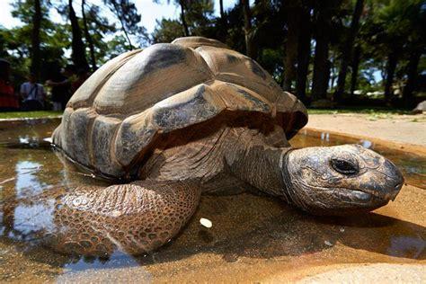 Tortue géante d'Aldabra | Zoo de la Palmyre