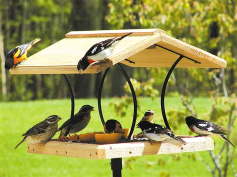 birds choice wrought iron cedar fly thru bird feeder