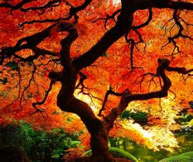 the world s best photos of autumn and woodlands flickr hive mind beautiful fall foliage around the world autumn tree