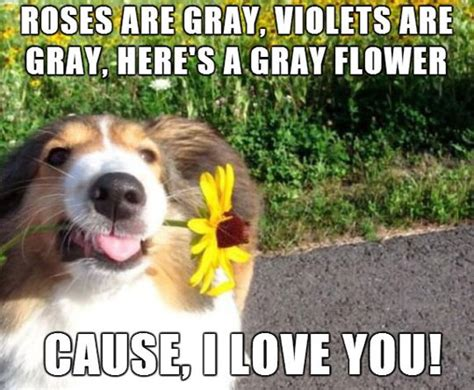Flower Meme - when dogs write poems