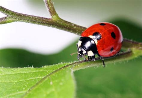 How To Get Rid Of Ladybugs Home The O Jays And Pretty Little
