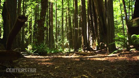 forest floor www pixshark images galleries with a