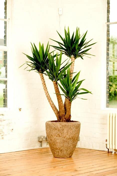 plantas de interior para salon plantas de interior fotos tronco para el salon