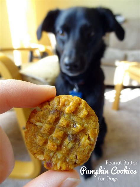 how much pumpkin for dogs peanut butter pumpkin cookies for dogs