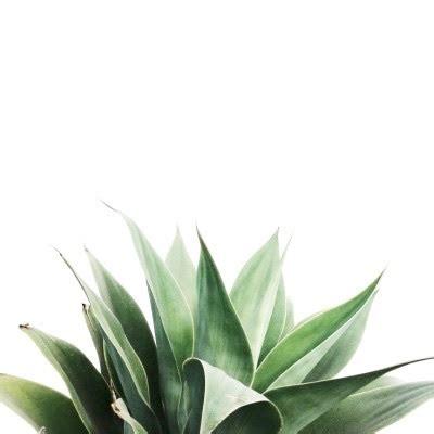 aesthetic background green minimalist wallpaper