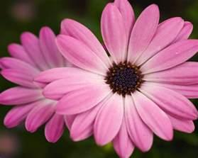 pretty pink flower