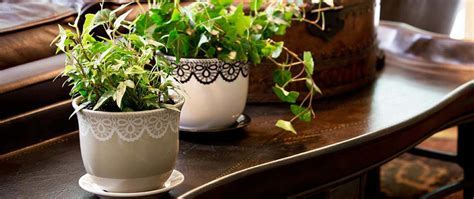 8 Steps to Growing a Healthy Indoor Garden Anytime