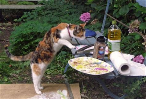 Backyard Bbq Battle Cats Exclusively Cats Veterinary Hospital Summer Safety Tips