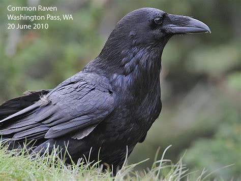 northwest nature notes february 2011
