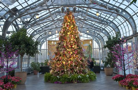 Ginter Botanical Gardens Top 5 Tips For Tree Trimming Lewis Ginter Botanical Garden